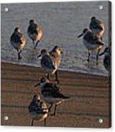Beach Meeting Acrylic Print