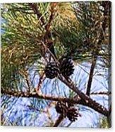 Beach Pine Acrylic Print