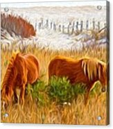 Beach Ponies Acrylic Print