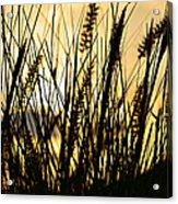 Beach Rise Acrylic Print