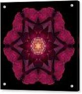 Beach Rose I Flower Mandala Acrylic Print by David J Bookbinder