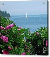 Beach Roses Acrylic Print