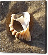 Beach Shell Acrylic Print by David Yack