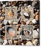 Beach Shells And Rocks Collage Acrylic Print by Carol Groenen