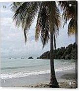 Beach With Palm Tree Acrylic Print