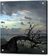 Beached Tree Acrylic Print