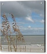 Beachview With Seaoat  Acrylic Print