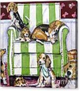 Beagle Mania Acrylic Print by Chris Dreher