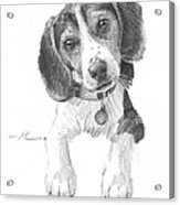 Beagle Puppy Pencil Portrait Acrylic Print