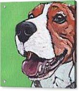 Beagle Timo Acrylic Print
