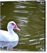 Beak And Feather Reflections Of The Muscovy  Acrylic Print