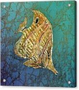 Beaked Butterflyfish Acrylic Print
