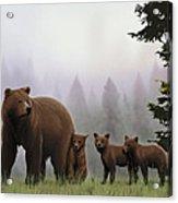 Bear And Cubs Acrylic Print