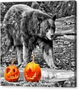 Bear And Pumpkins Too Acrylic Print