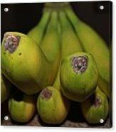 Bear Face Bananas  Acrylic Print