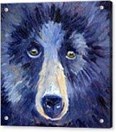Bear Face Acrylic Print