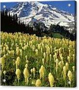 Bear Grass At Mt. Rainier - V Acrylic Print