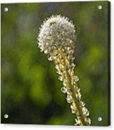 Bear Grass Glow Acrylic Print