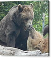 Bear Kisses Acrylic Print