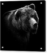 Portrait Of Bear In Black And White Acrylic Print