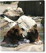 Bear Smooches Acrylic Print
