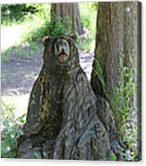 Bear In A Tree Acrylic Print