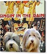 Bearded Collie Art Canvas Print - Singin In The Rain Movie Poster Acrylic Print