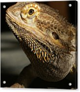 Bearded Dragon Profile Acrylic Print