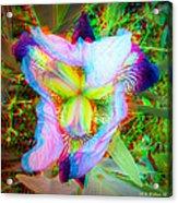 Bearded Iris Cultivar - Use Red-cyan 3d Glasses Acrylic Print