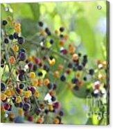 Bearing Good Fruit Acrylic Print