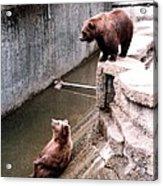 Bears Feeding Time At The Zoo Acrylic Print