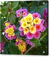 Beaucoup Of Blooms Acrylic Print