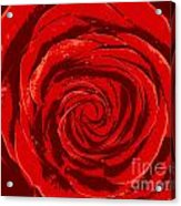 Beautiful Abstract Red Rose Illustration Acrylic Print