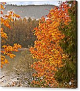 Beautiful Autumn Gold Art Prints Acrylic Print