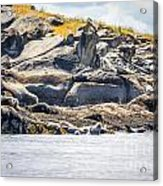 Seals And Rock Scupltures Acrylic Print