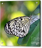 Beautiful Black N White Rice Paper Butterfly Acrylic Print