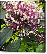 Beautiful Bloom Acrylic Print