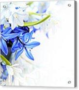 Beautiful Blue White Flower Acrylic Print