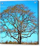 Beautiful Branching Acrylic Print