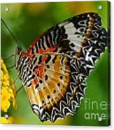Leopard Lacewing Acrylic Print