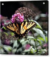 Beautiful Butterfly Acrylic Print