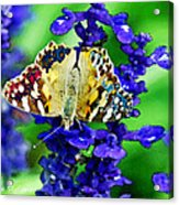 Beautiful Butterfly On A Flower Acrylic Print