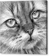 Beautiful Cat Acrylic Print by Olga Shvartsur