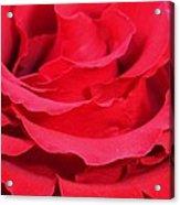 Beautiful Close Up Of Red Rose Petals  Acrylic Print