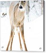Beautiful Deer Acrylic Print