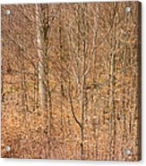 Beautiful Fine Structure Of Trees Brown And Orange Acrylic Print
