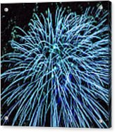Beautiful Fireworks 13 Acrylic Print