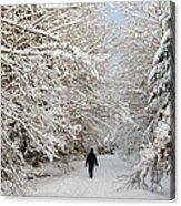 Beautiful Forest In Winter With Snow Covered Trees Acrylic Print by Matthias Hauser