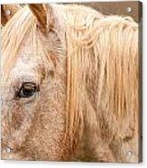 Beautiful Gray Horse Portrait Acrylic Print