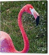 Beautiful In Pink Acrylic Print